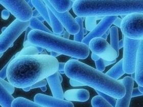Penyakit Kolera